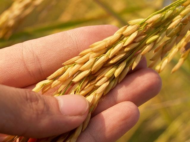 酵素玄米、美味しいから続けられる