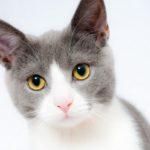 猫好きなら全部分かる?猫ワールドあれこれ