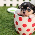 ペットショップで犬のトレーニング(米国編)